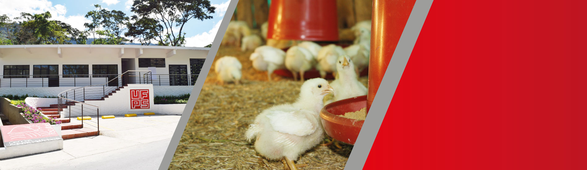 La UFPS recibe Registro Calificado para ofrecer el programa de Zootecnia