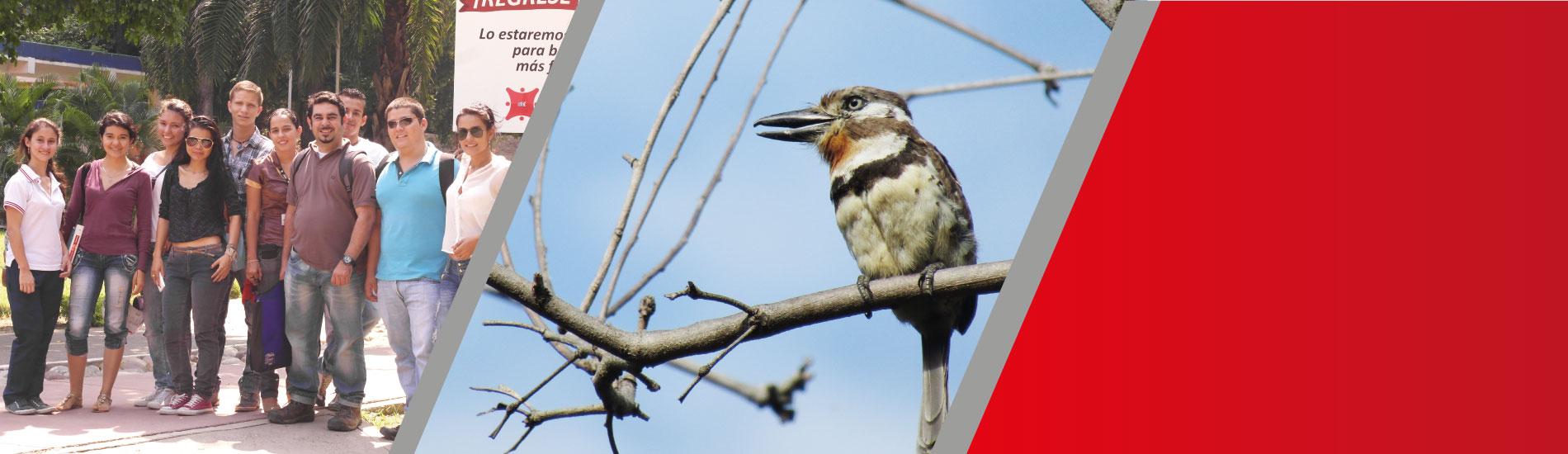 Semillero de Investigación UFPS adelantó jornada de observación de aves para identificar las especies que hacen presencia en ciertas zonas de Cúcuta